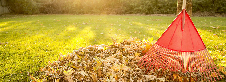 <div id=slideshow_title>Grass & Leaf Pickup</div> <br>Grass clipping and leaf pickup has been extended to the end of November, weather permitting. The last pickup will be Tuesday, November 26th.