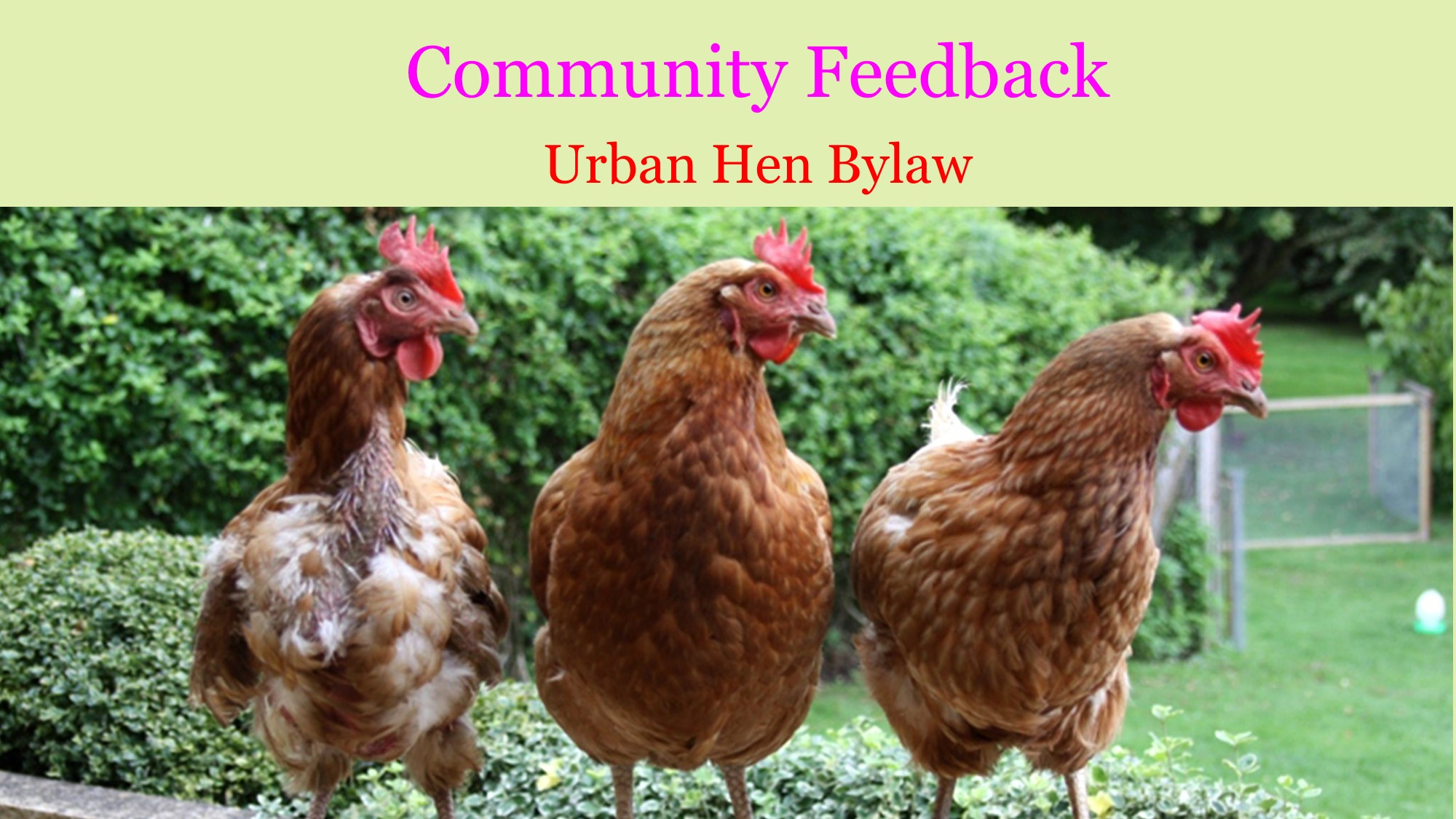 <div id=slideshow_title>Urban Hen Bylaw</div> <br>Town Council is asking for Community Feedback on the proposed Urban Hen Bylaw. Email admin@picturebutte.ca by May 14th.
